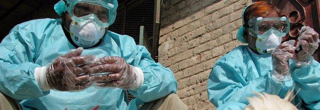 Torna la paura dell'aviaria: focolaio ad alta patogenicità in un allevamento