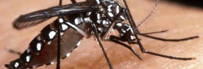 Zanzara tigre, 67 province a rischio invasione: c'è anche Roma Mappa