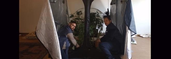Studente universitario di 24 anni e pusher: in camera chili di hashish e marijuana