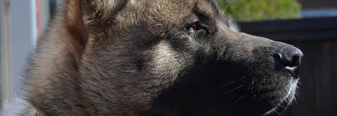 «Il suo cane è grande come una mucca: non può entrare nel supermercato»