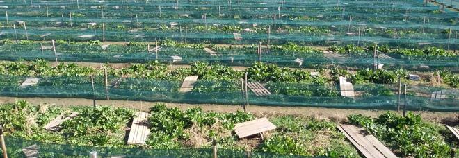 Il fascino unico delle chiocciole conquista tutti: gli allevamenti biologici