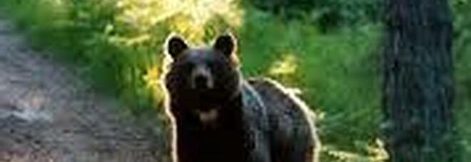 Orso si unisce al picnic di una famiglia americana - Video