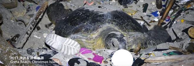 Mamma tartaruga depone le uova in mezzo ai rifiuti: le drammatiche immagini