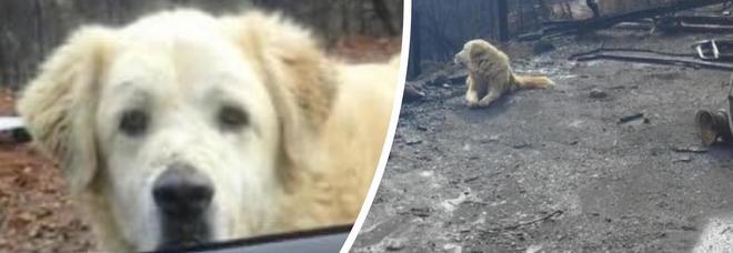 La casa va a fuoco, il cane resta ad aspettare la sua padrona per un mese
