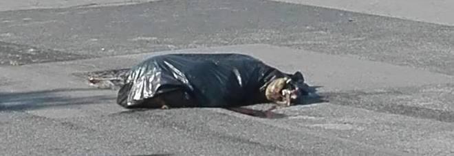 cane morto in strada