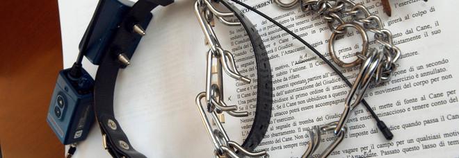 Cane abbaia spesso il padrone risolve col collare elettrico: denunciato