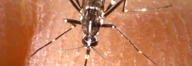 Febbre del Nilo, 52enne punta da una zanzara: ricoverata in gravi condizioni