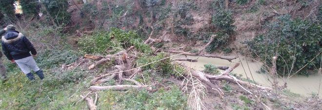 Grossa quercia crolla sul torrente: rischio tappo ed esondazione