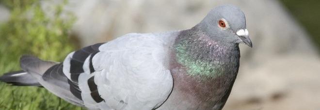 Sorelle avvelenate da escrementi  di piccione durante una vacanza
