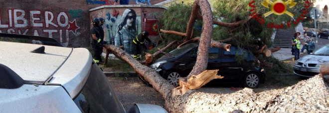 Roma, un pino si abbatte su due auto in sosta. Nessun ferito