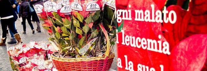 L'AIL torna con le stelle di Natale in 4800 piazze italiane, appuntamento l'8-9-10 dicembre