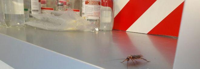 Napoli, scarafaggi tra i medicinali: ecco le nuove foto dello scandalo Oggi la disinfestazione in ospedale