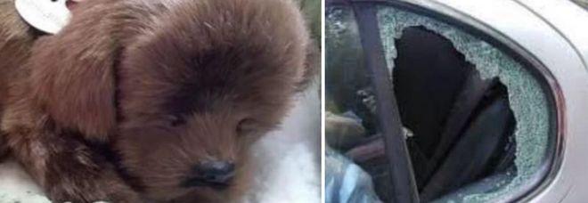 Il cucciolo di pelouche e il finestrino rotto (immagini pubblicate da County Gazzette)