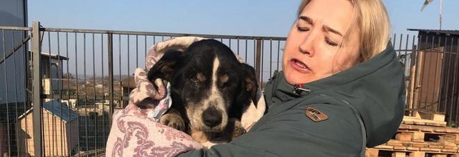 Il cane è morto e viene sepolto, due giorni dopo