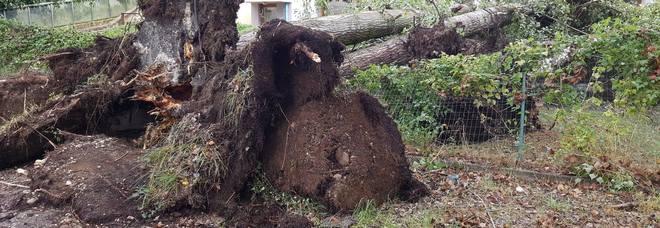 Pioggia e vento, Feltrino in ginocchio: gli alberi sradicati sul tetto della scuola