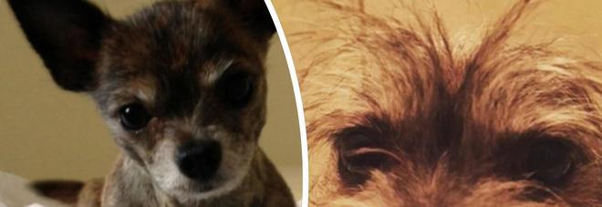 Vende tutto per salvare il suo cane con un'operazione e il web si mobilita per aiutarla