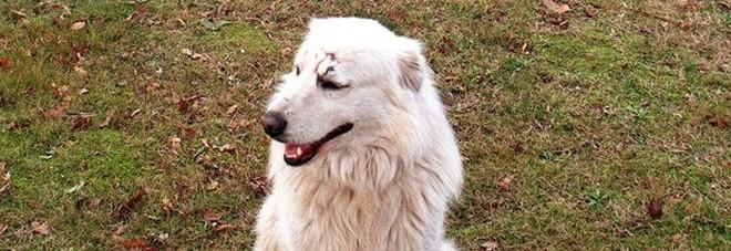 Oltre 240mila firme per liberare il cane che abbaiava troppo: ma di notte non potrà uscire