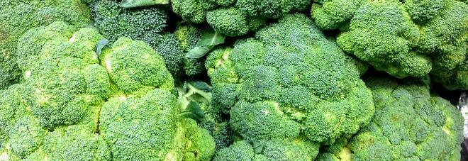 Broccoli, ottimi durante la gravidanza e contro l'anemia. Ecco le altre proprietà benefiche