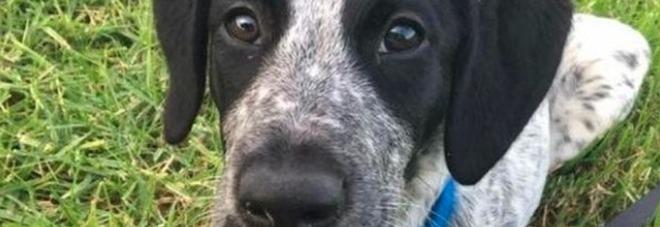 Lasciava il cane senza cibo, maxi multa da 15mila euro per il cacciatore