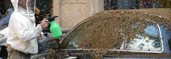 Attaccato da uno sciame di vespe mentre cammina: muore in pochi minuti Ecco cosa fare in caso di choc