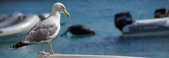 Isole Tremiti, sette cose da fare (e da vedere) nelle perle dell'Adriatico