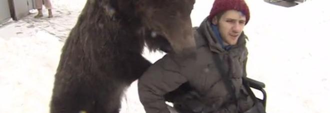 Russia, un orso sostiene il suo addestratore finito su una sedia a rotelle dopo un grave incidente