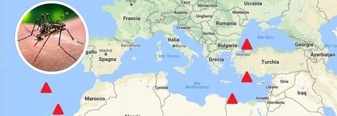 La zanzara che porta febbre gialla e zyka, allarme in Europa:
