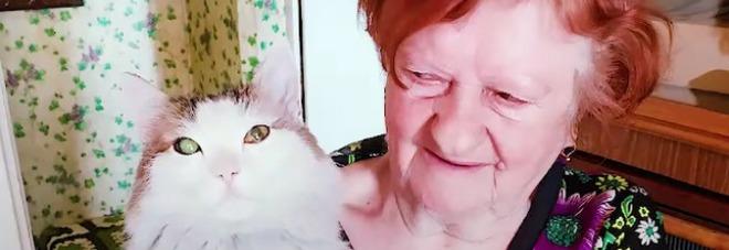 Anziana rischia di morire, il gatto la morde al collo e le salva la vita