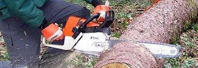 Si taglia il braccio con la motosega mentre fa legna: grave boscaiolo