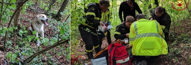 Strattonata dal cane al guinzaglio ragazza di 15 anni cade nel dirupo