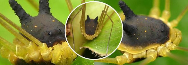 Strana creatura che sembra un ragno, ma ha la testa di un coniglio: ecco cosa è