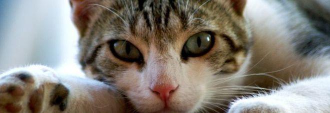 Roma, gattino di strada disabile: mamma lo accudisce anche se è cresciuto