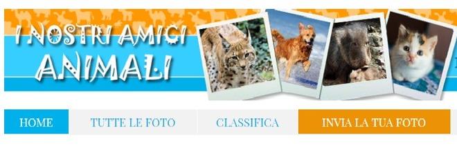"""I """"nostri Amici Animali"""", nuovo contest fotografico del Gazzettino: ecco regolamento e premi"""