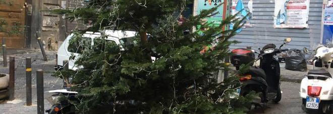L'albero di Natale in piazzetta san'Anna di Palazzo che una babygang ha provato a rubare