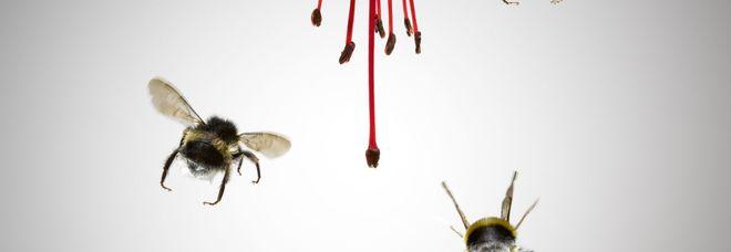 Scoperta nel mondo animale: anche le api sanno fare somme e sottrazioni