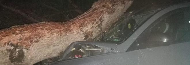 Maltempo, pino crolla su un'auto: due persone vive per miracolo