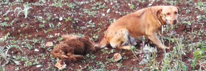 Cane randagio veglia per ore la cagnolina investita e uccisa da un'auto