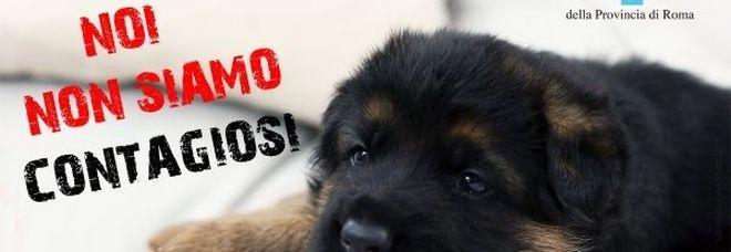 Coronavirus, parte la campagna di sensibilizzazione contro l'abbandono di animali domestici: «Non contagiano»