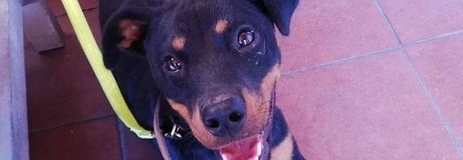 Benevento, cagnolina gettata dall'auto in corsa sulla superstrada: salvata in tempo, ora cerca casa