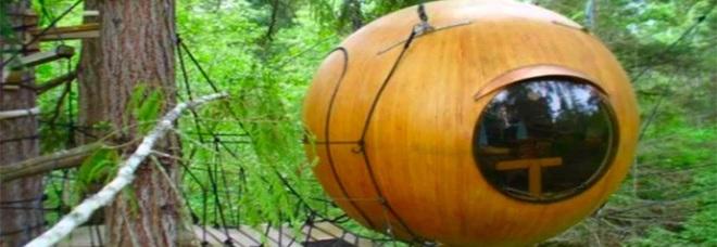 Il lusso è di casa sulle ghiande appese agli alberi a Vancouver in Canada