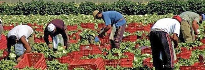 Decreto sicurezza e agricoltura: «Il rischio è creare un esercito di lavoratori in nero»