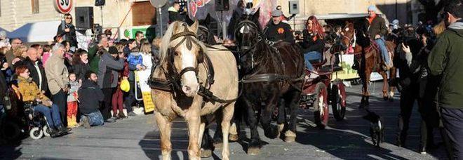 Cavalli infiocchettati