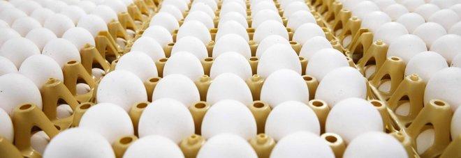 Aviaria, Hong Kong blocca le importazioni di pollo e uova da Milano