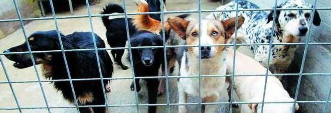 Cani e gatti rinchiusi e senza acqua:  denunciata volontaria animalista