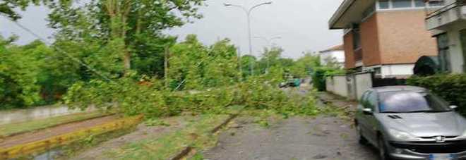 Grandine, vento e pioggia: ancora rami spezzati e alberi crollati in centro
