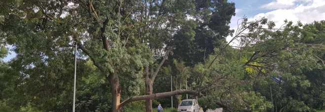 Tragedia sfiorata: un grosso ramo d'albero si abbatte sulla strada
