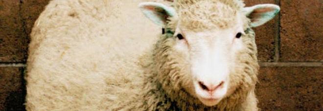 La verità su Dolly, la pecora clonata non morì di invecchiamento precoce