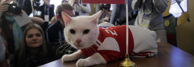 Il gattino Achille come il polpo Paul: «È sordo, vede col cuore». E al primo match dice Russia