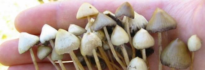 I funghi allucinogeni curano la depressione cronica: