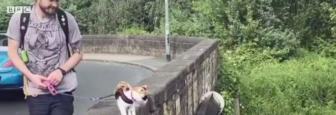 Gira per strada con la sua gatta: «È la mia migliore amica, mi ha salvato la vita»